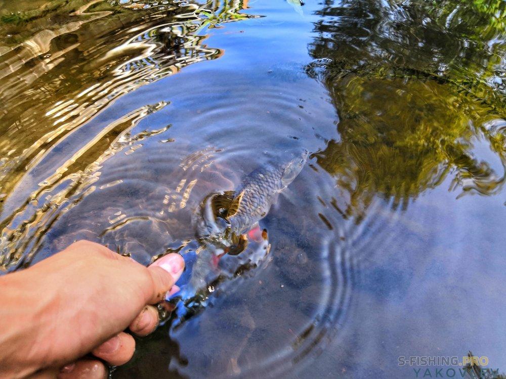 EcoGroup - эксклюзивный представитель брендов Maximus, Alaskan, LureMax, PowerPhantom, BlackSide, EcoPro, Saykio: Две реки, одна рыбалка
