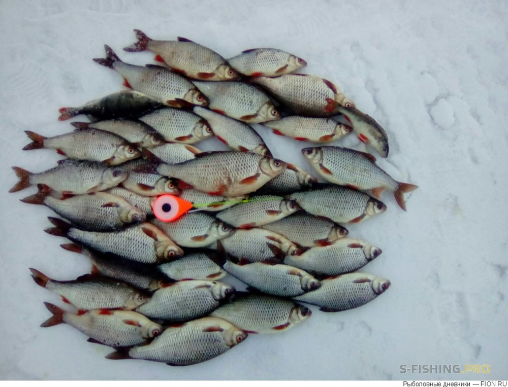 Отчеты с водоемов: Отчет о рыбалке: 11 марта 2017 - 13 марта 2017, Волга (Горьковское водохранилище)