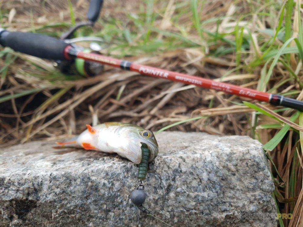Отчеты с водоемов: Предучебная рыбалка