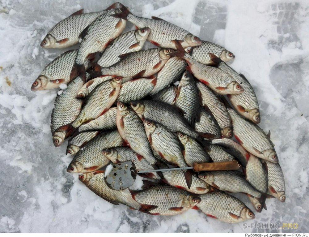 Отчеты с водоемов: Отчет о рыбалке: 18 марта 2017 - 19 марта 2017, Волга (Горьковское водохранилище)