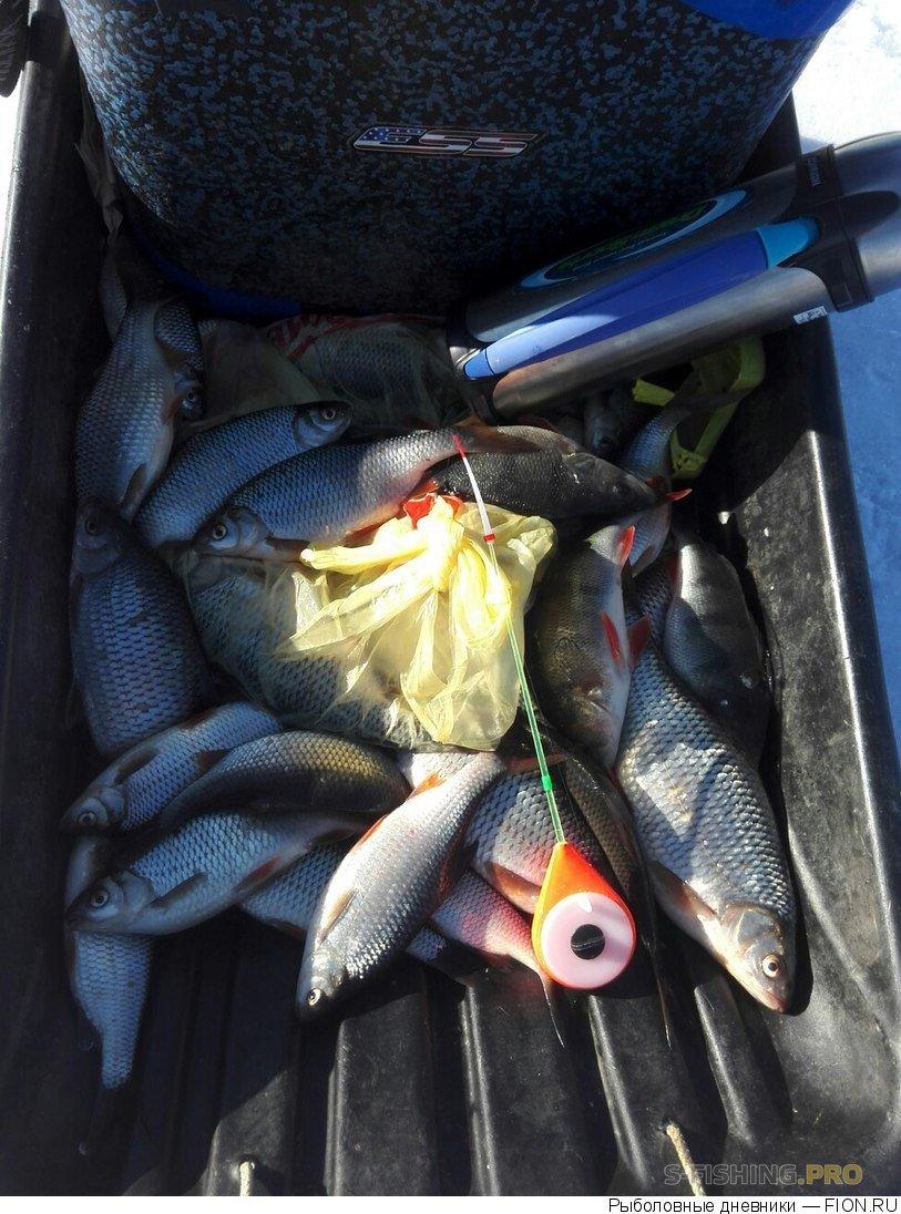 Отчеты с водоемов: Отчет о рыбалке: 01 апреля 2017 - 02 апреля 2017, Волга (Горьковское водохранилище)