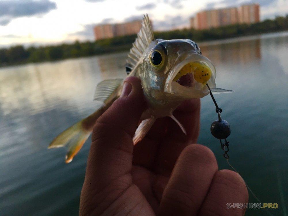 Обзоры: Экспериментальная рыбалка