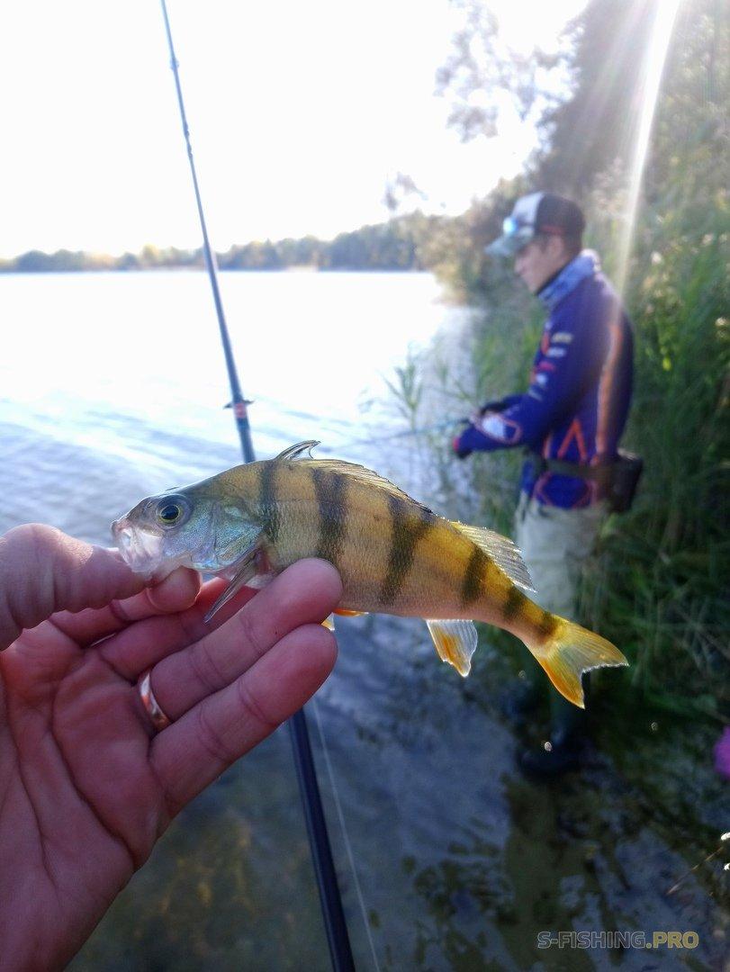 Отчеты с водоемов: Фотки с рыбалки.