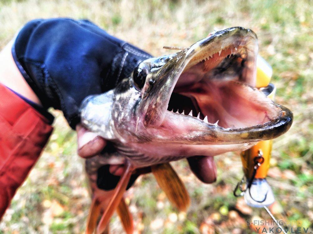 EcoGroup - эксклюзивный представитель брендов Maximus, Alaskan, LureMax, PowerPhantom, BlackSide, EcoPro, Saykio: Рыбалка в райском уголке . Часть 2.