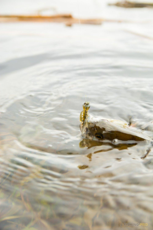 Отчеты с водоемов: Опять пруд, снова окунь.