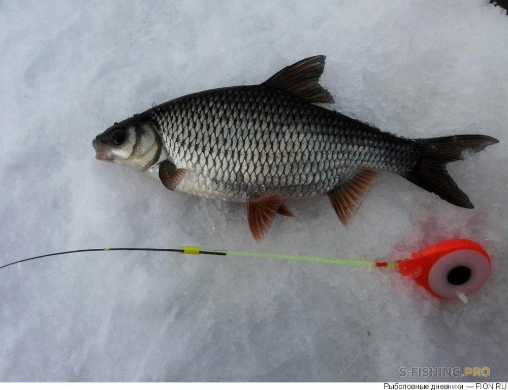 Отчеты с водоемов: Отчет о рыбалке: 31 марта 2018 - 01 апреля 2018, Волга (Пучеж)