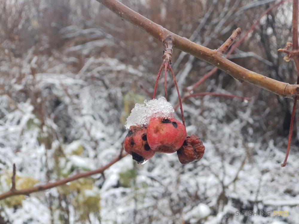 Отчеты с водоемов: Снежное утро
