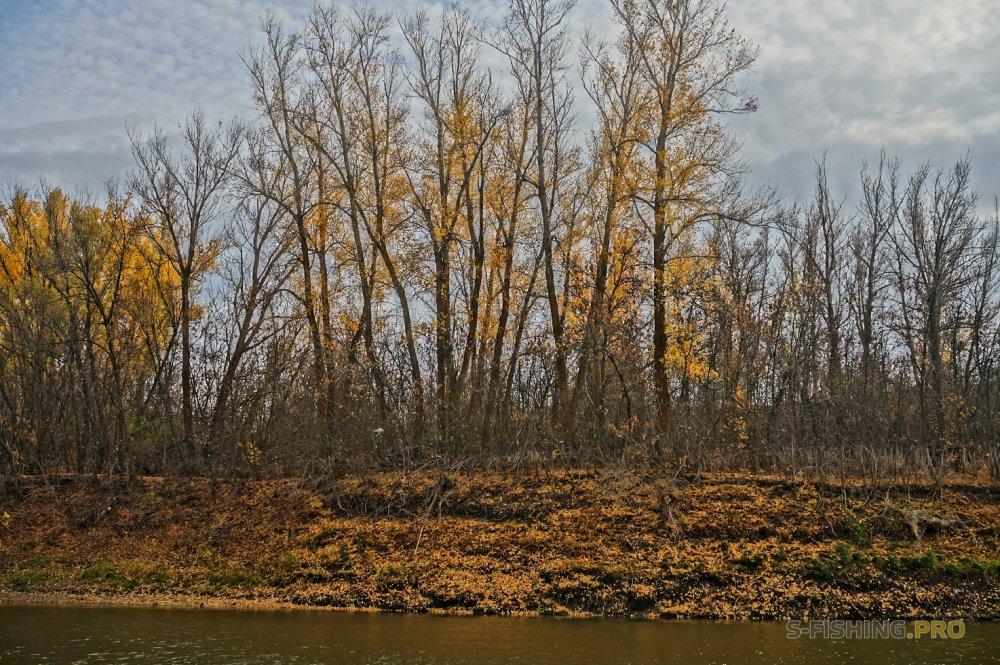 Отчеты с водоемов: Золотые осенние краски или привередливая щука