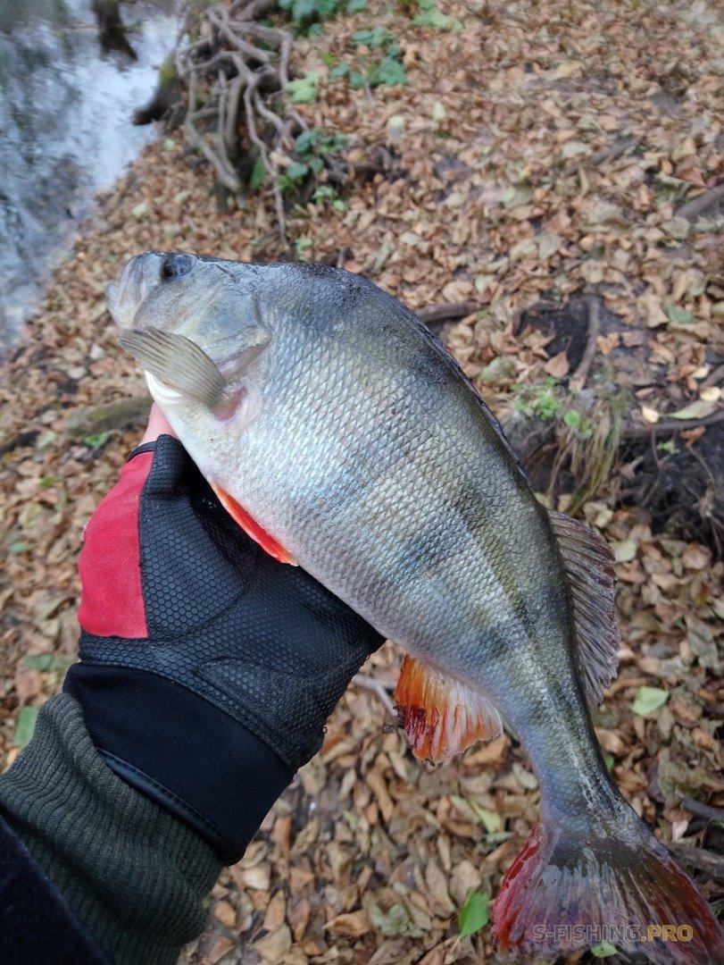 Отчеты с водоемов: Рыбалка. Ничего нового, опять окуни.