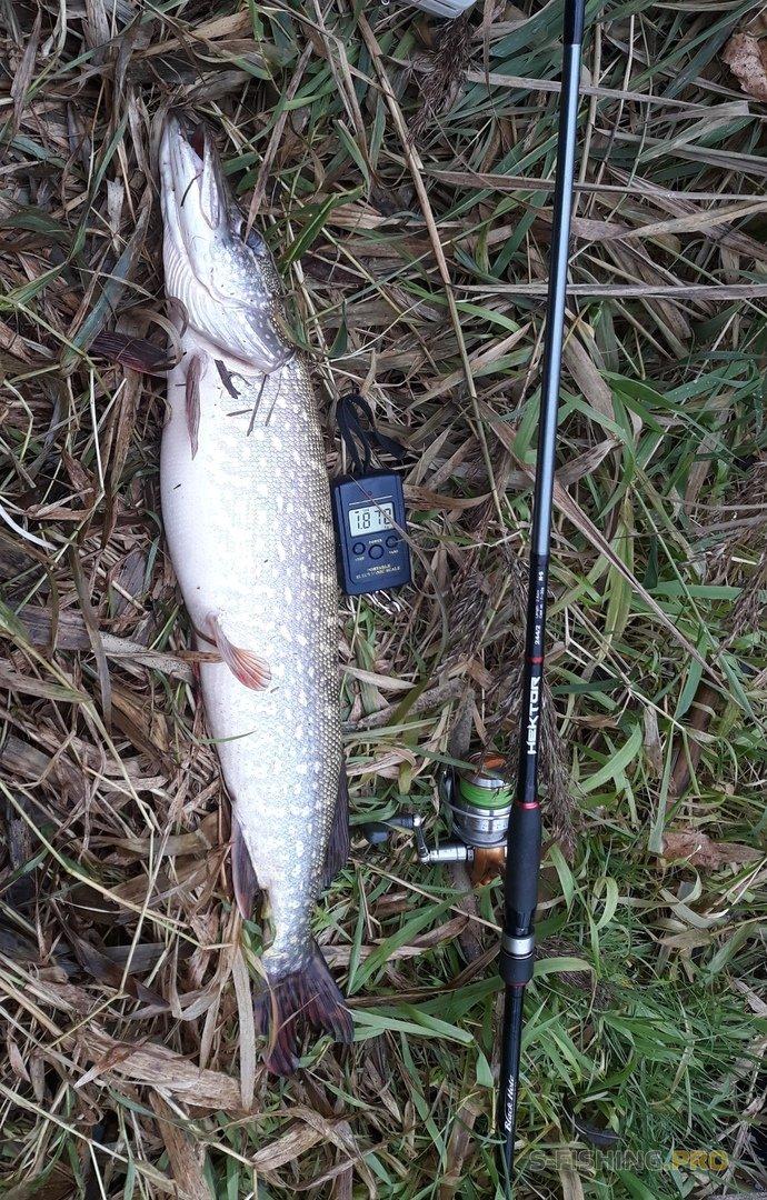 Отчеты с водоемов: Щучья рыбалка 1.11. Знаки свыше.