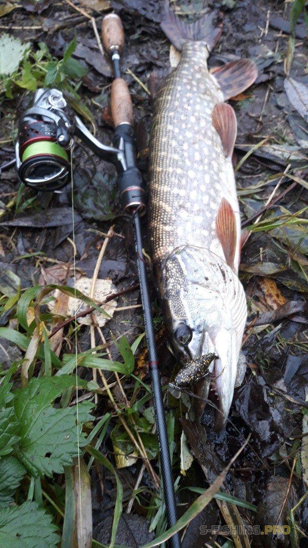 Отчеты с водоемов: рыбалка 30.10. Малая река, щука