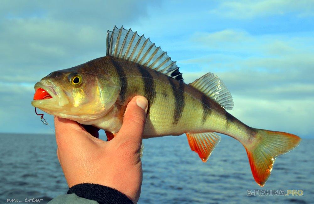 Отчеты с водоемов: Продуктивная рыбалка