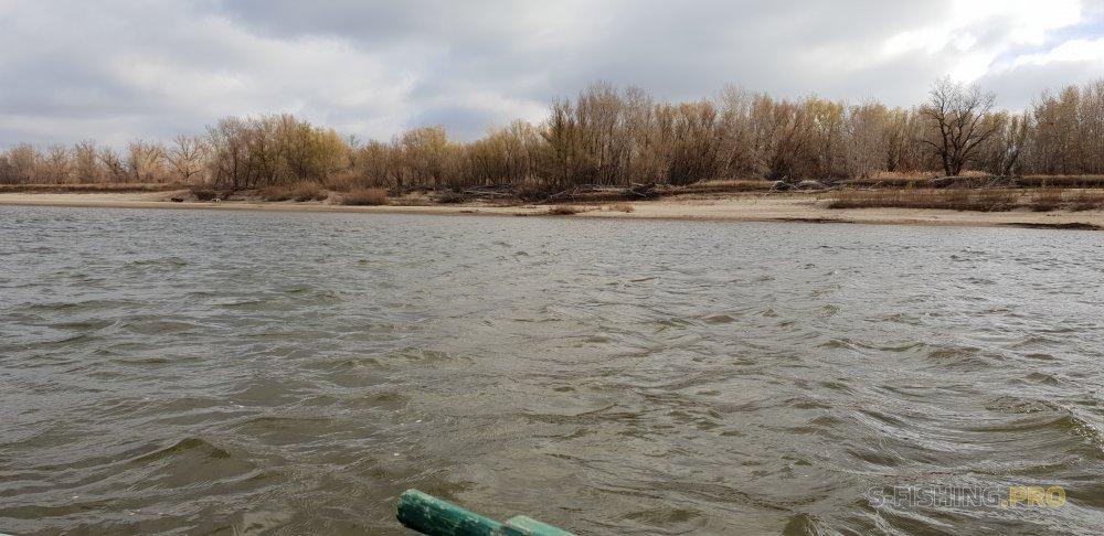Отчеты с водоемов: Нижняя Волга (4.11-10.11.2018)