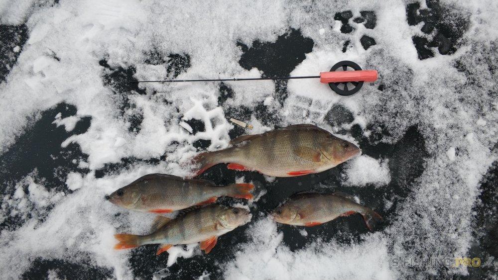 Блог им. EarlRomario: Первый лед