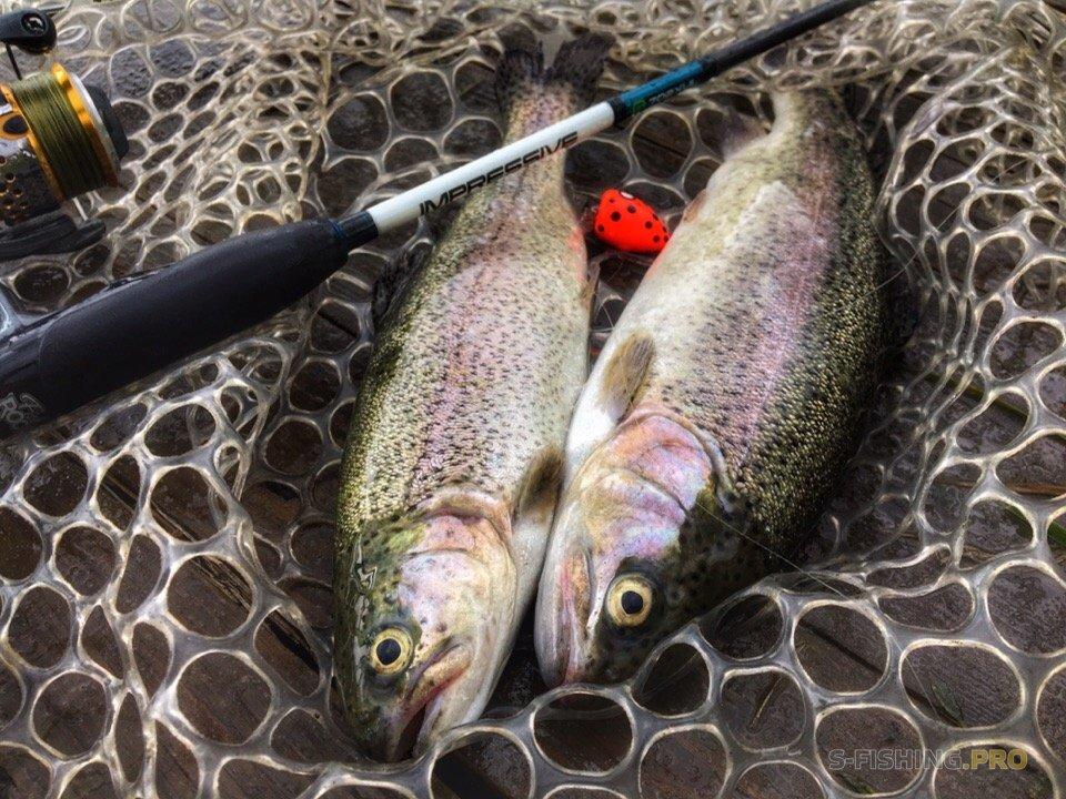 Блог им. JigHunter: Первая рыба