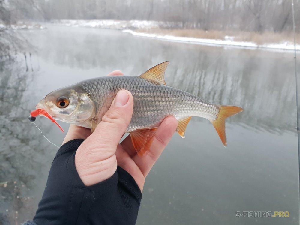 Отчеты с водоемов: Удачная рыбалка с новым спиннингом