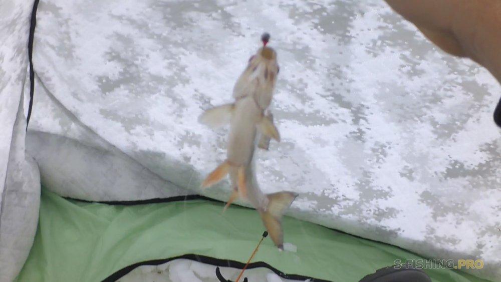 Блог им. viponline: зимняя рыбалка в Алтайском крае,на озере Топольное