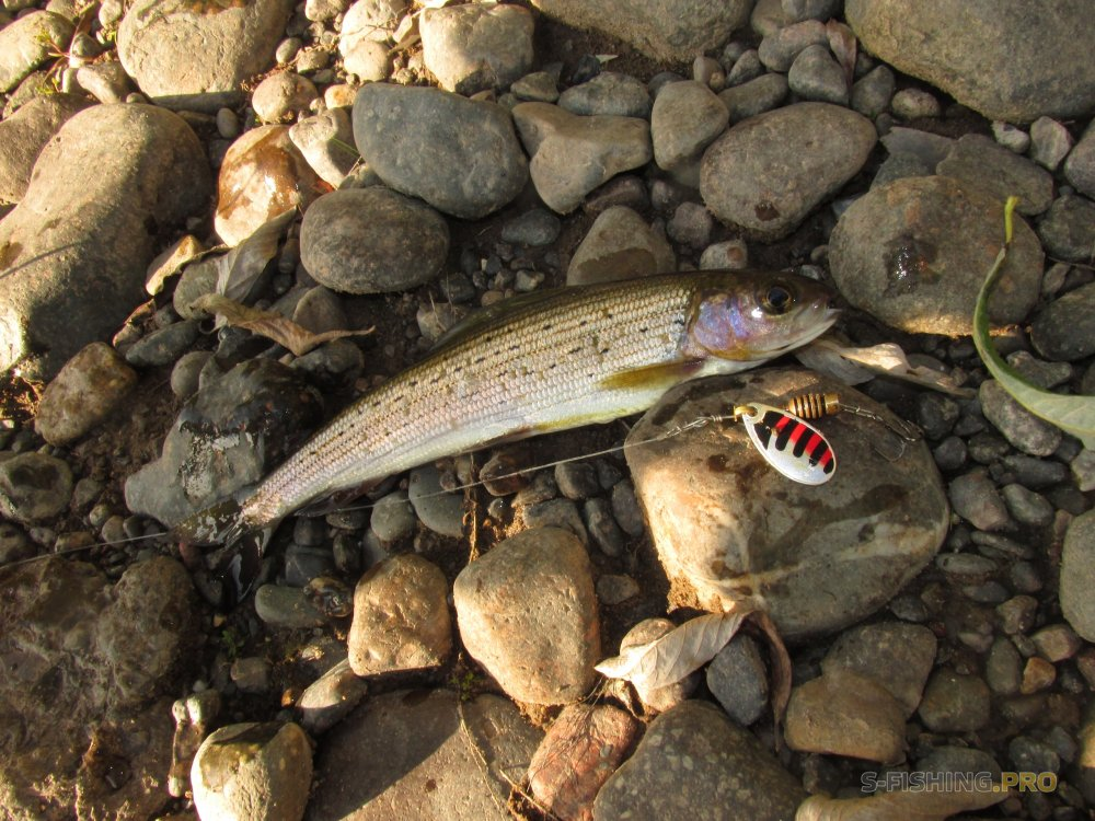Отчеты с водоемов: Рыбалка на сибирской реке