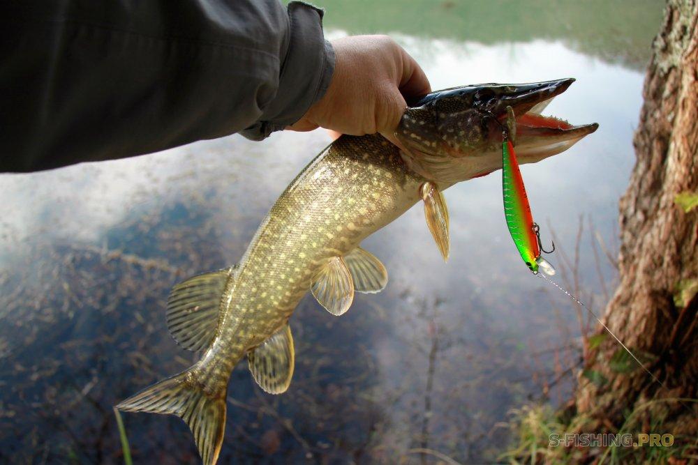Отчеты с водоемов: Первые зимние щучки