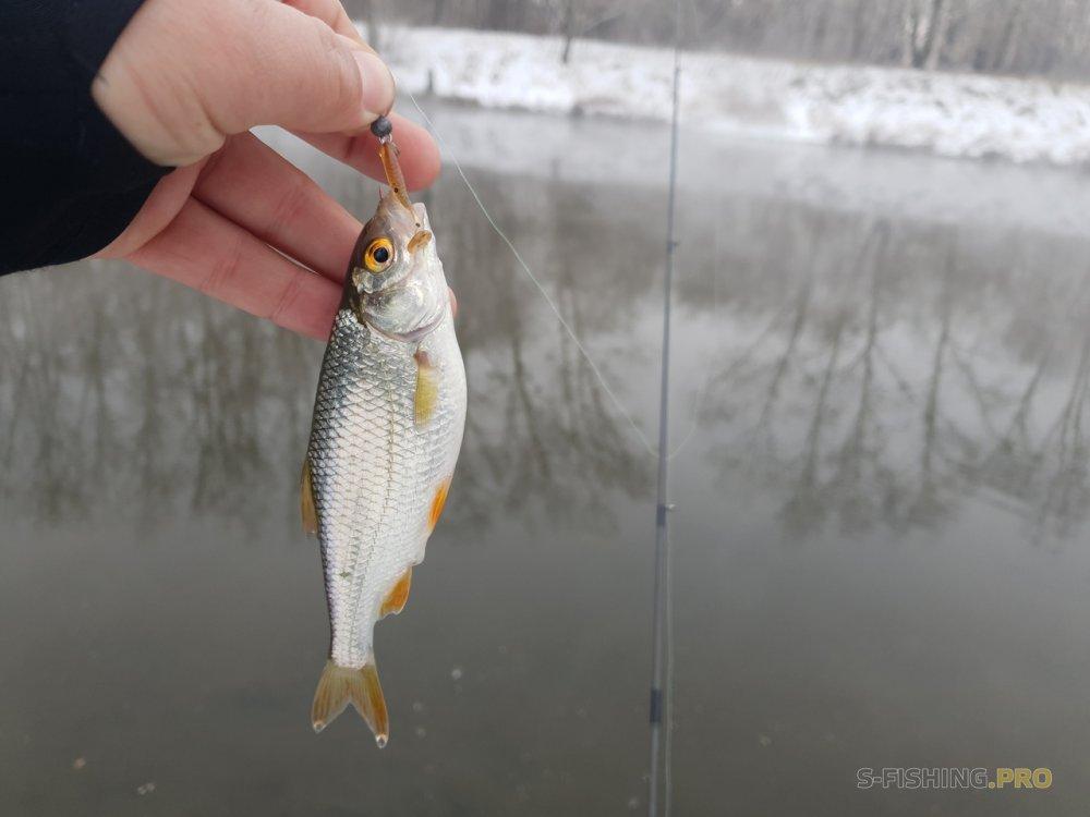 Отчеты с водоемов: Непонятная рыбалка