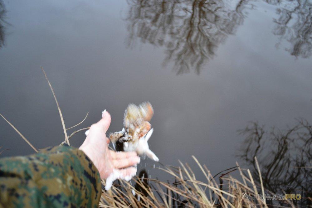 Блог им. VitaliyShindin: Голодная но капризная щука