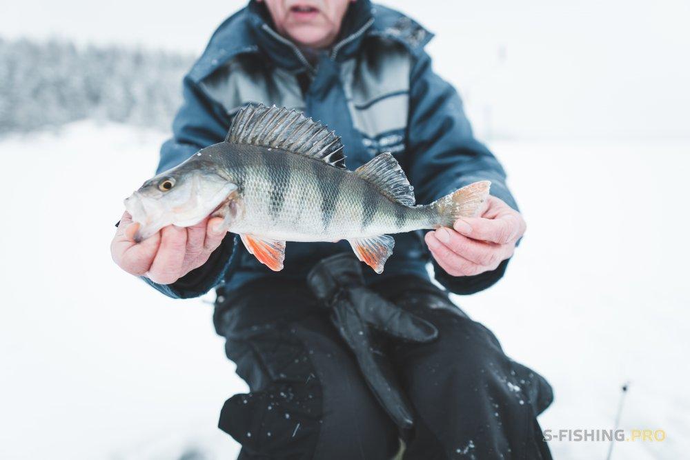 Отчеты с водоемов: Первая зимняя рыбалка на жерлицы по первому льду. Первые щуки. Открытие сезона.
