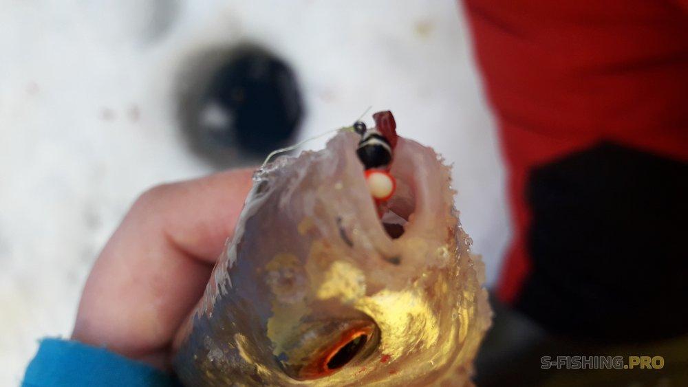 Отчеты с водоемов: Второй день отпуска на рыбалке