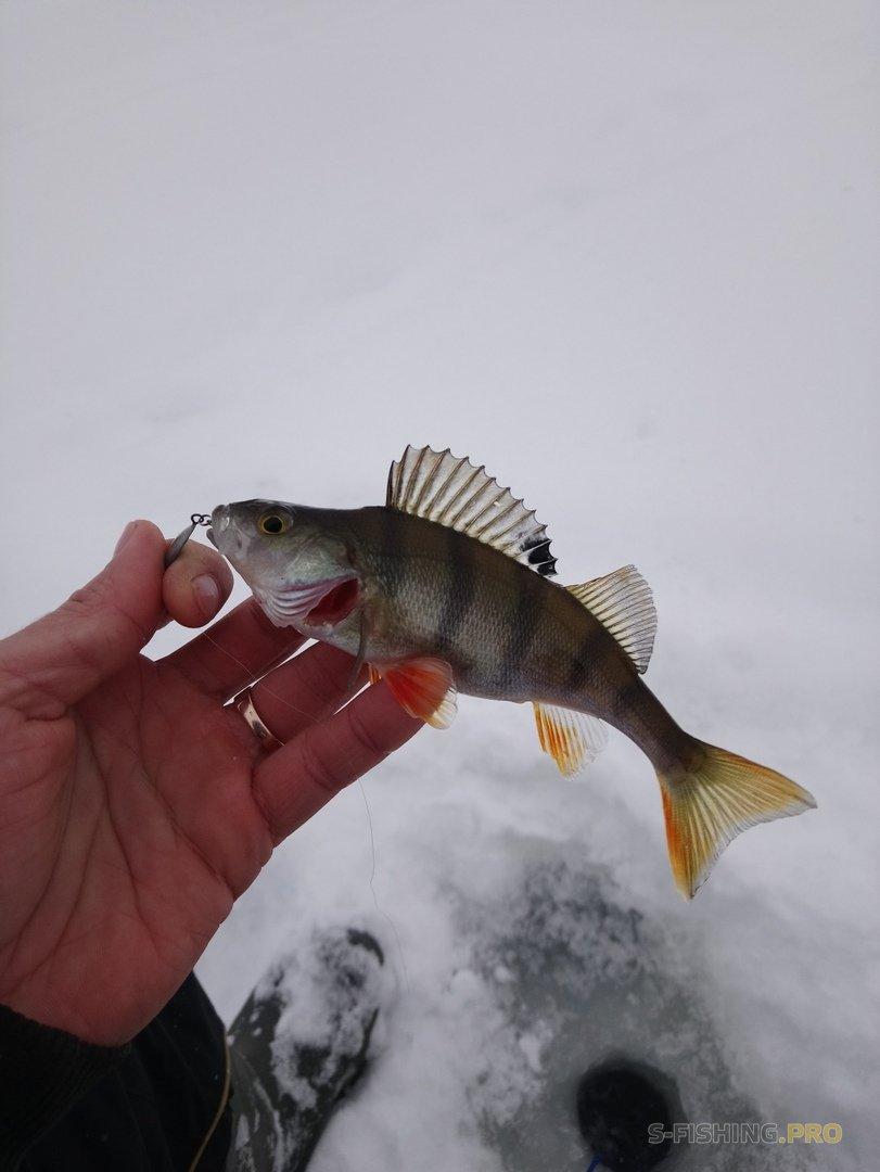 Отчеты с водоемов: Не много о сегодняшней рыбалке.
