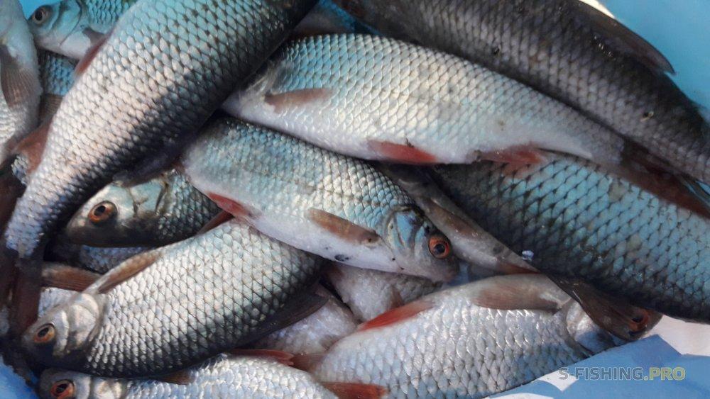 Отчеты с водоемов: Первая трёхдневная рыбалка в 2019 году