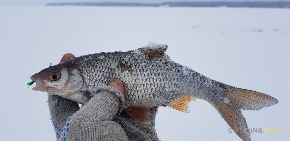 Отчеты с водоемов: Четыре дня на льду в январские