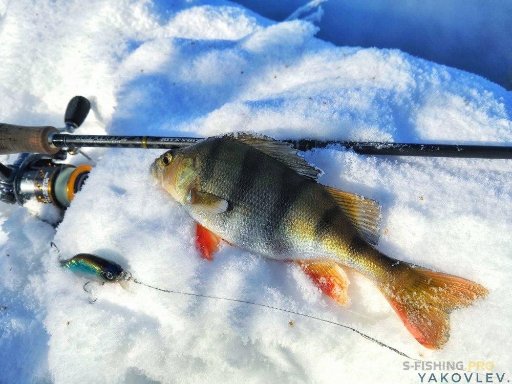 EcoGroup - эксклюзивный представитель брендов Maximus, Alaskan, LureMax, PowerPhantom, BlackSide, EcoPro, Saykio: Хардкорная рыбалка в - 23