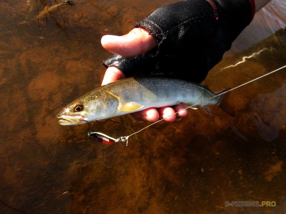 Отчеты с водоемов: Эксперименты на реке