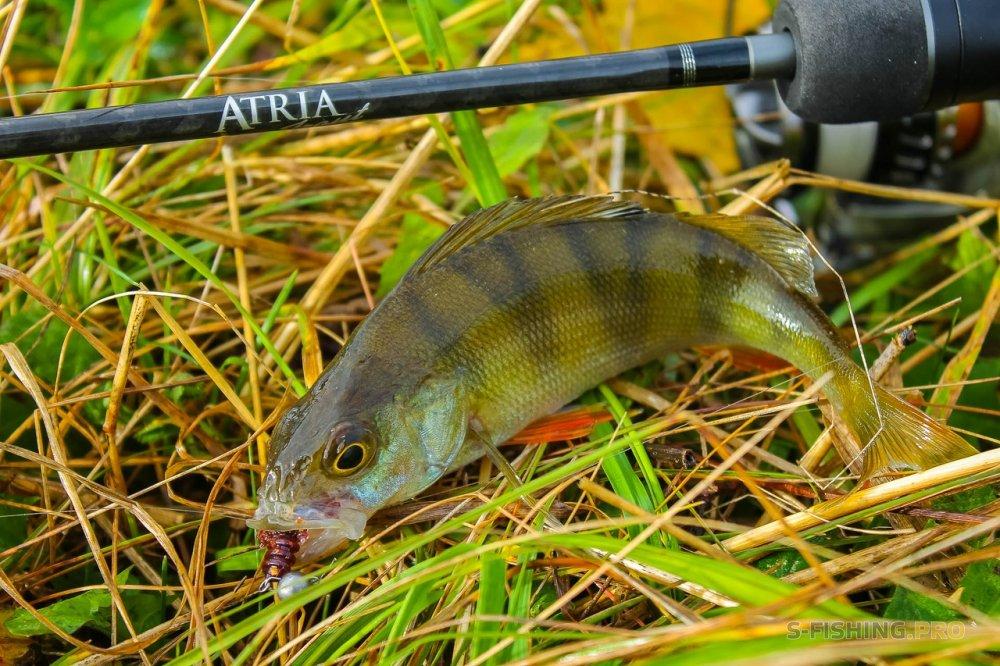 Обзоры: Обзор Atria Trout 602SUL