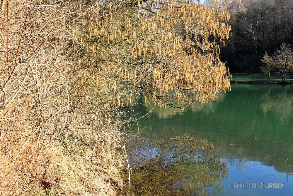 Отчеты с водоемов: Зимой и не пахнет, даже раки выходят погреться.