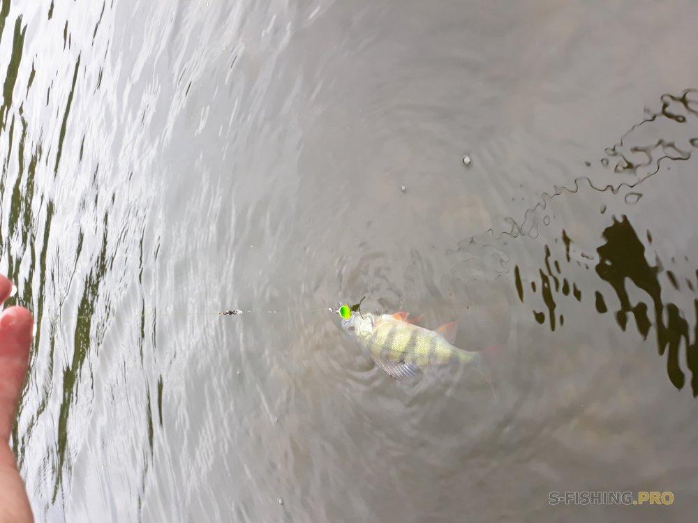 Отчеты с водоемов: Микроколебалка Kosadaka Cicadas Wing