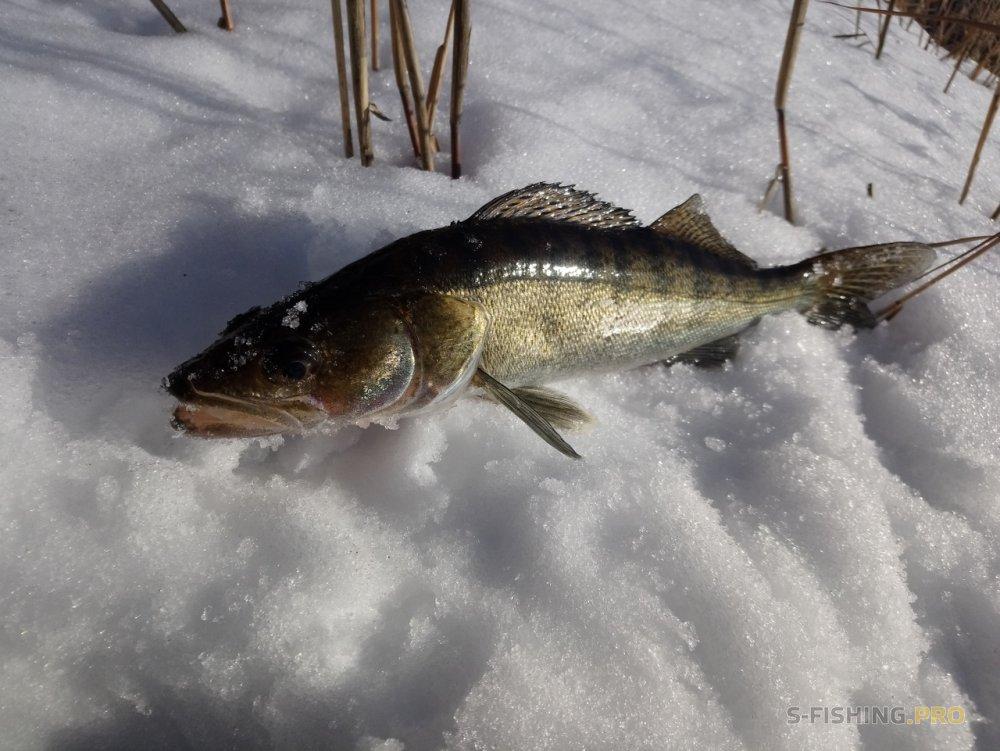 Отчеты с водоемов: Ребёнок на рыбалке.