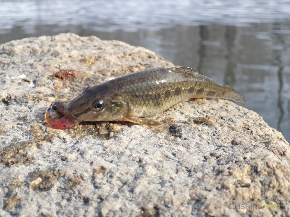 Отчеты с водоемов: Первая весенняя рыбалка