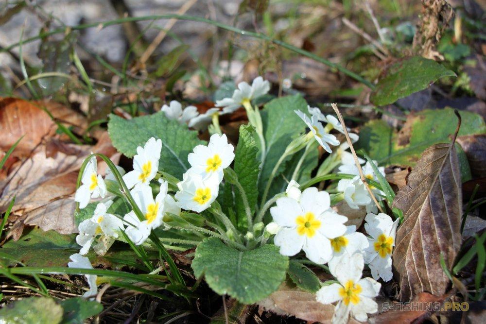 Отчеты с водоемов: Весна в Сочи набирает обороты