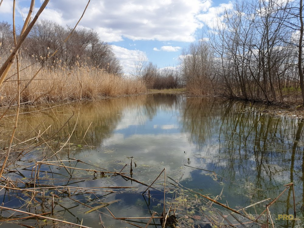 Отчеты с водоемов: На безрыбье и рак рыба