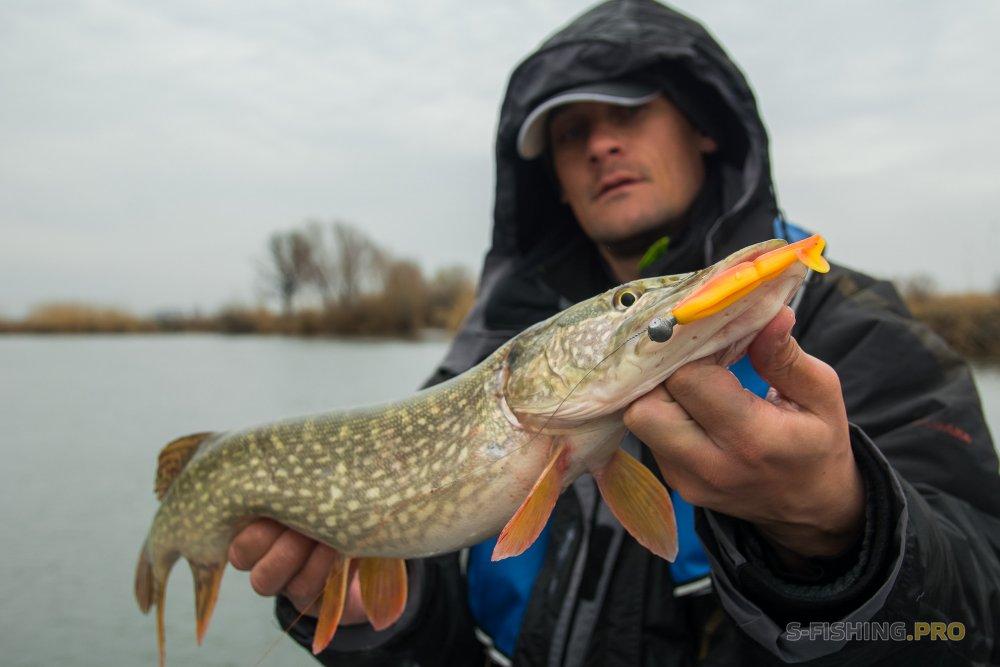 Отчеты с водоемов: Отборы на PAL 2019. Часть 2. Нашли и поняли как ловить щуку и другую рыбу.