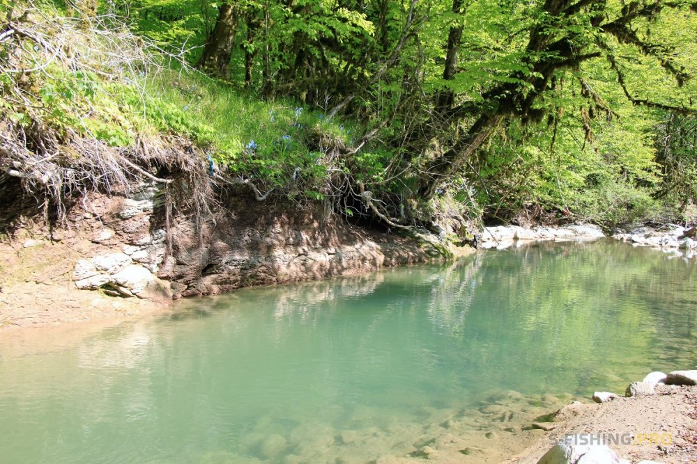 Блог им. DmitriyDmitriev: Утро...Горная речка...Лес...