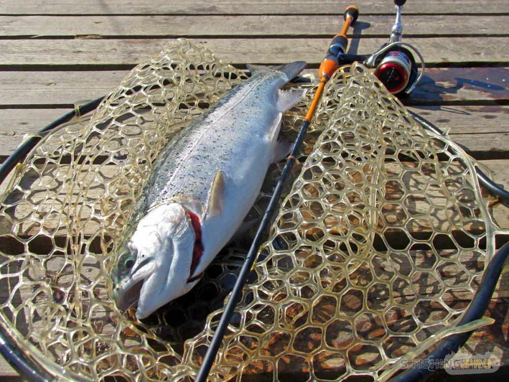 Отчеты с водоемов: FishPark, апрель 2019