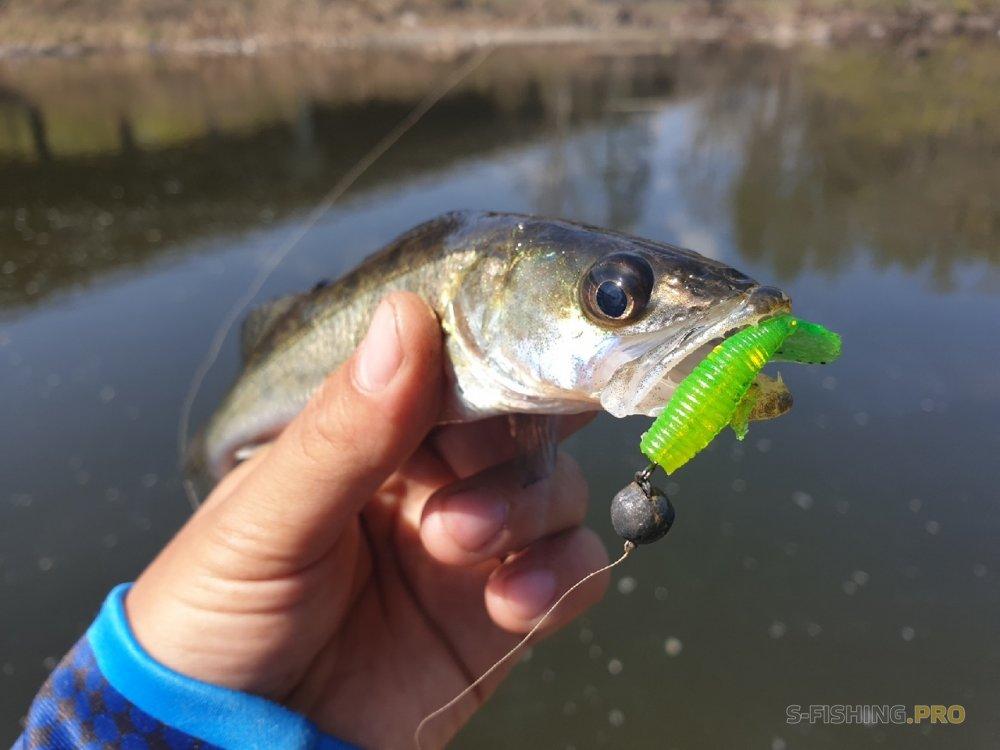 Отчеты с водоемов: Насыщенная микроджиговая рыбалка