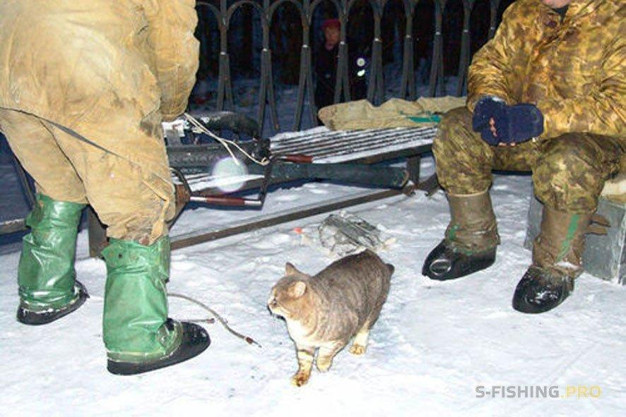 Обзоры: Рыбалка и кошки