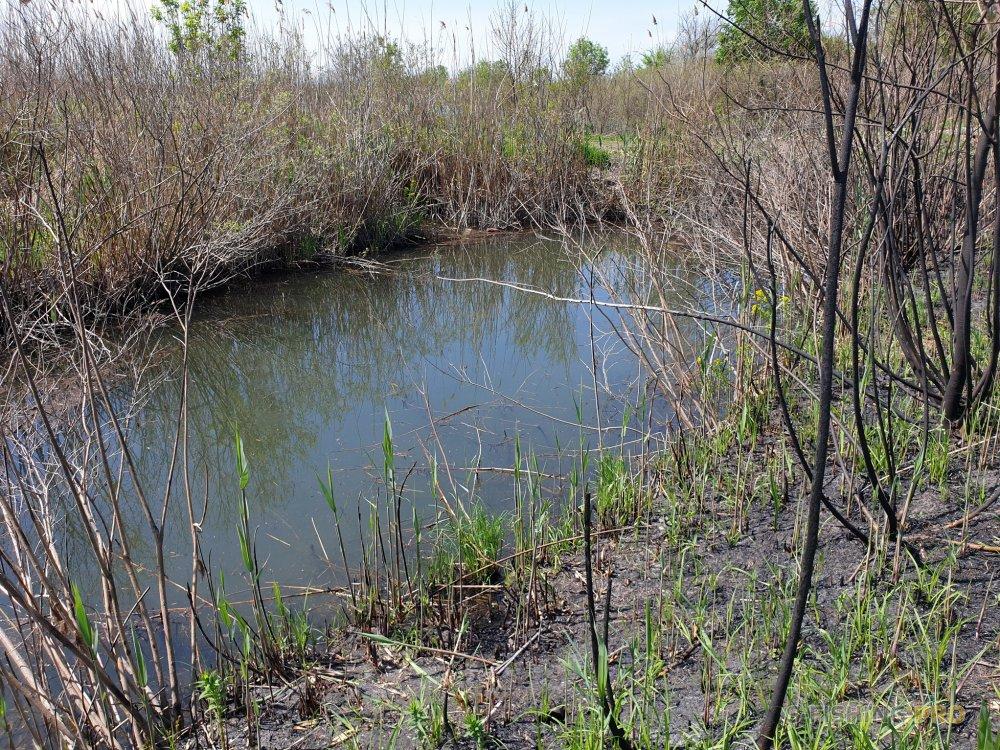 Отчеты с водоемов: Щука в засаде