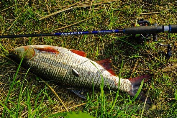 Отчеты с водоемов: язь спасает рыбалку!