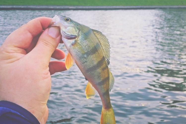 Рыбалка на микроджиг на Кронверкской протоке
