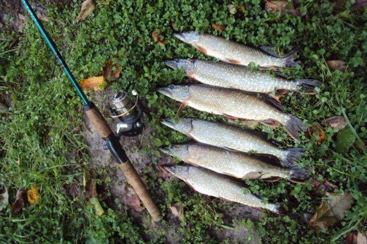 Удачная рыбалка!!!