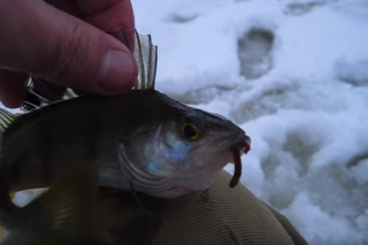 Отчёт о рыбалке , Черноисточинский пруд , день второй.
