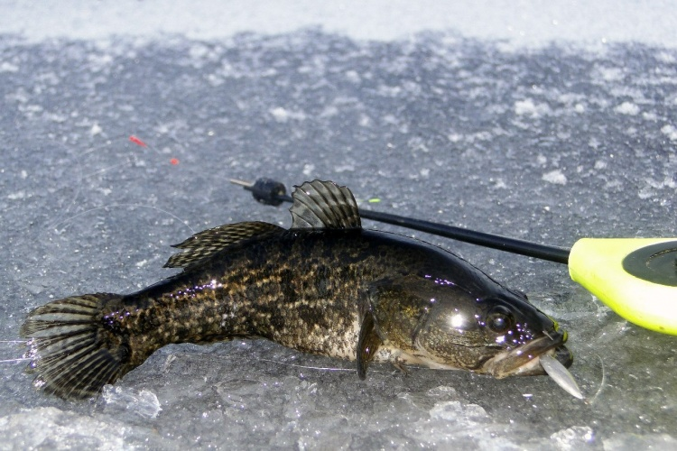 Первый лёд или последняя рыбалка в этом году.)